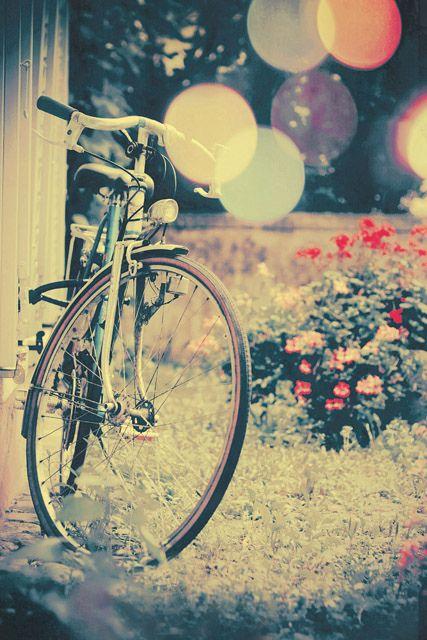 travel photography Florida landscape nostalgic photo Vintage bicycle photography print giant tree nature photography vintage bicycle