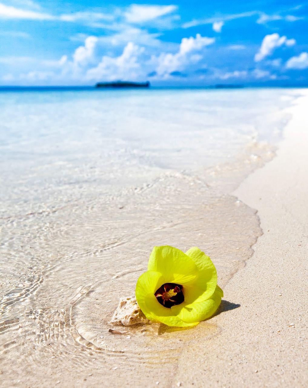Island white sand beach beach yellow flowers turn island white island white sand beach beach yellow flowers turn island white mightylinksfo