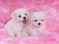 Cute puppies photo   Cute Animals Photos