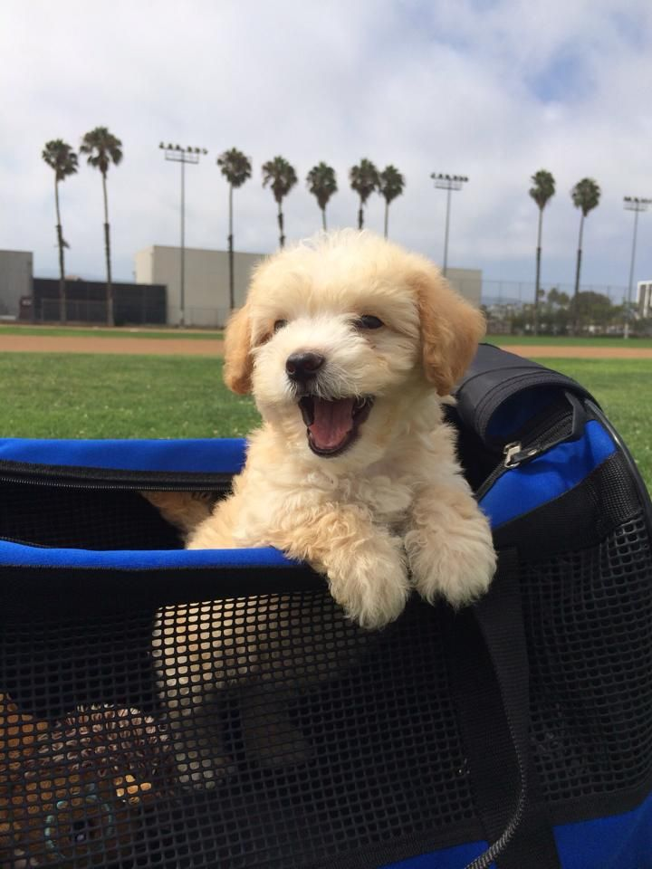 42 Of The Most Important Puppies Of All Time Smiling Dogs
