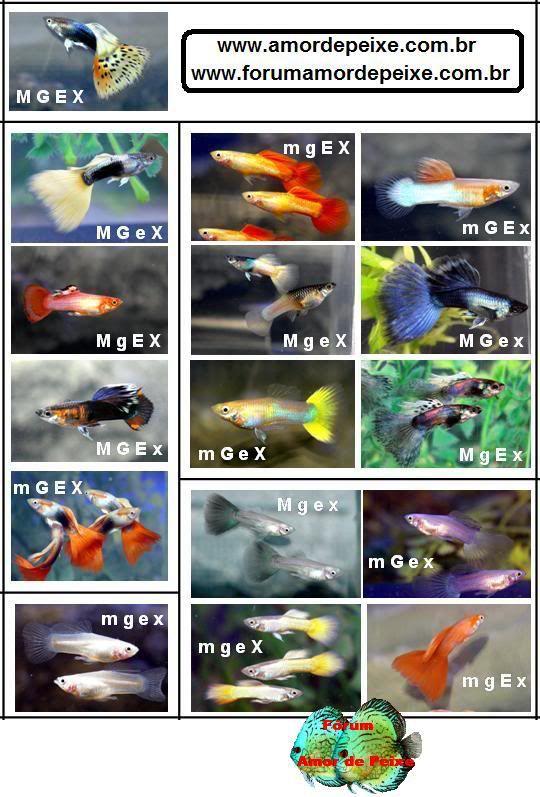 Pin By Racky Salzman On O O Guppy Aquarium Fish
