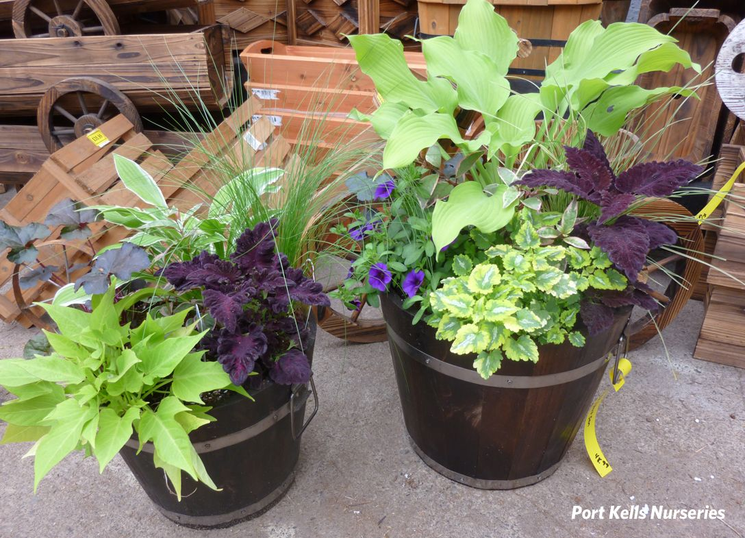 container garden ideas for shade - Flower Garden Ideas Partial Sun