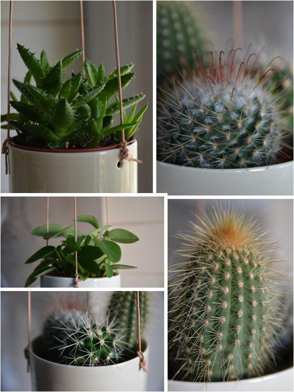 Classy succulent hanging pot