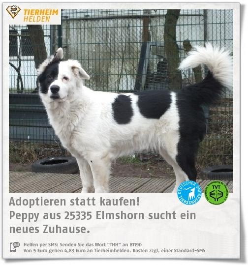 Pin Von Tierheimhelden On Pinterest Auf Tiere Aus Dem Tierheim Tierheim Tiere Und Hunde