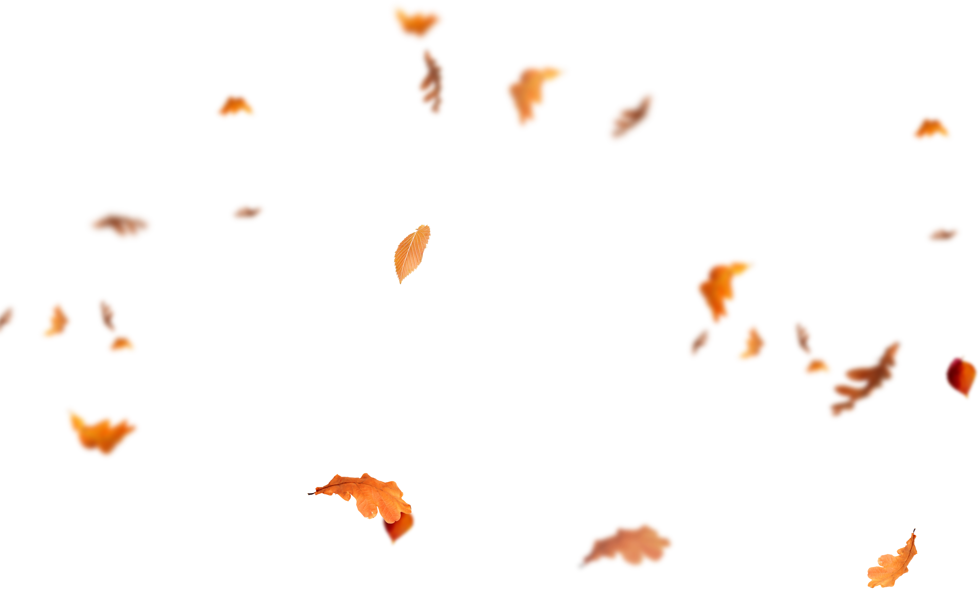 Download Falling Leaves Png Images Flying Autumn Leaf Png Free Fall Leaves Png Autumn Leaves Png