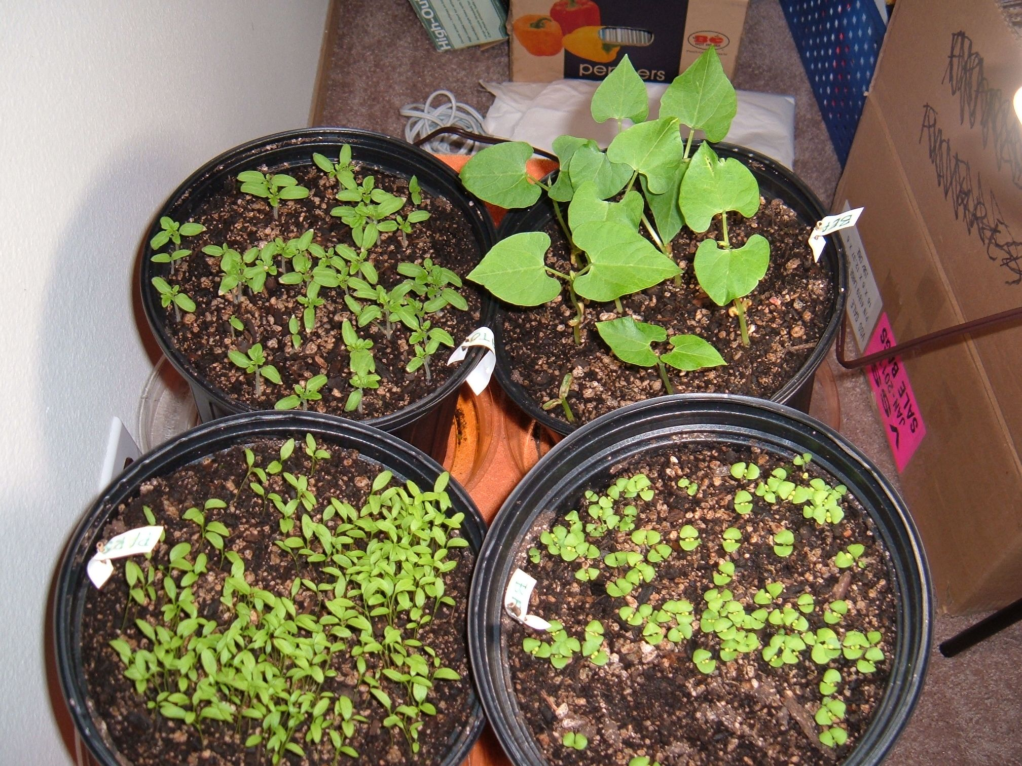Indoor apartment herb garden | All Things Awesome | Pinterest ...