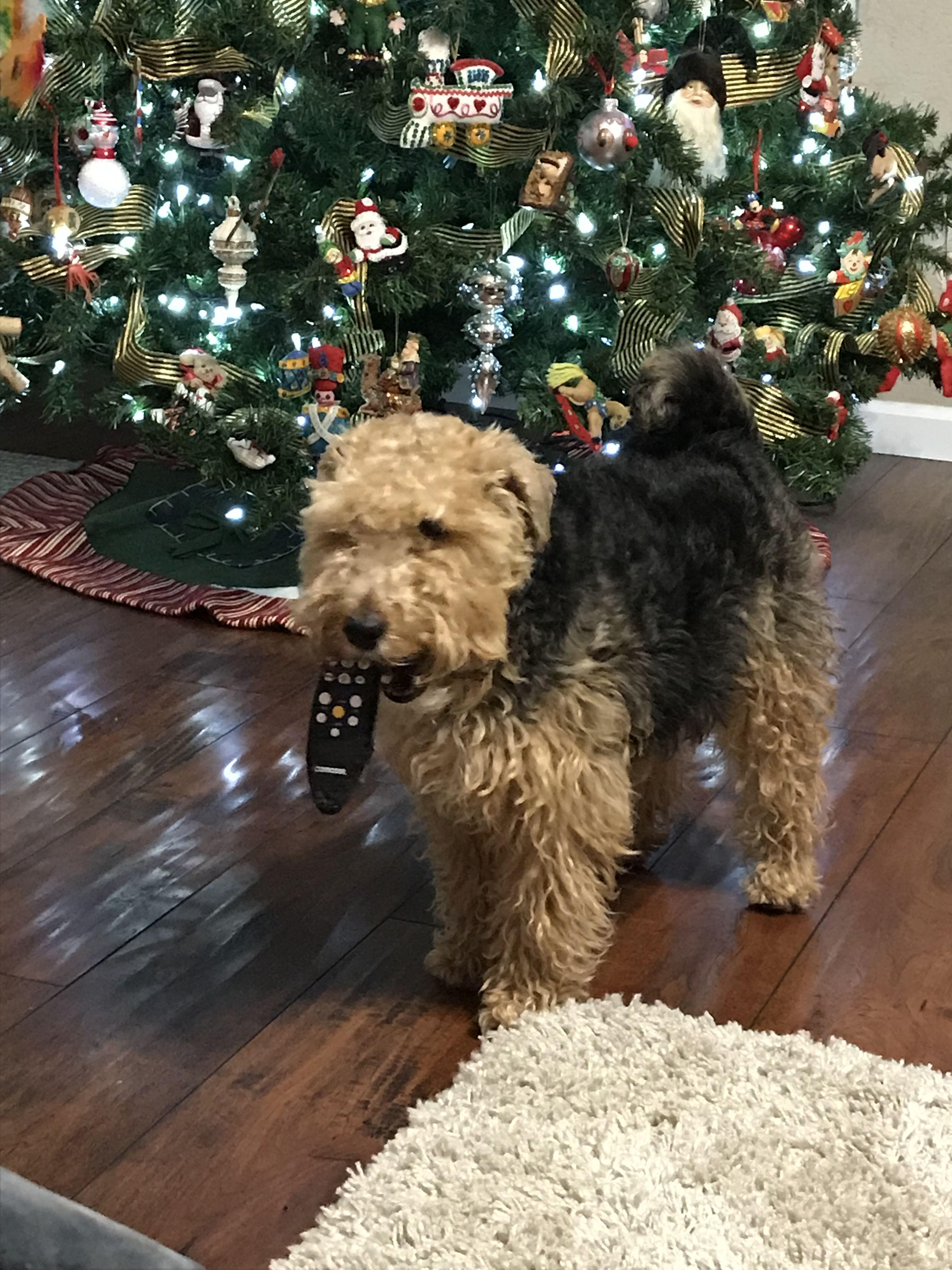 Come get me dad! I got your remote !! Funny dog memes