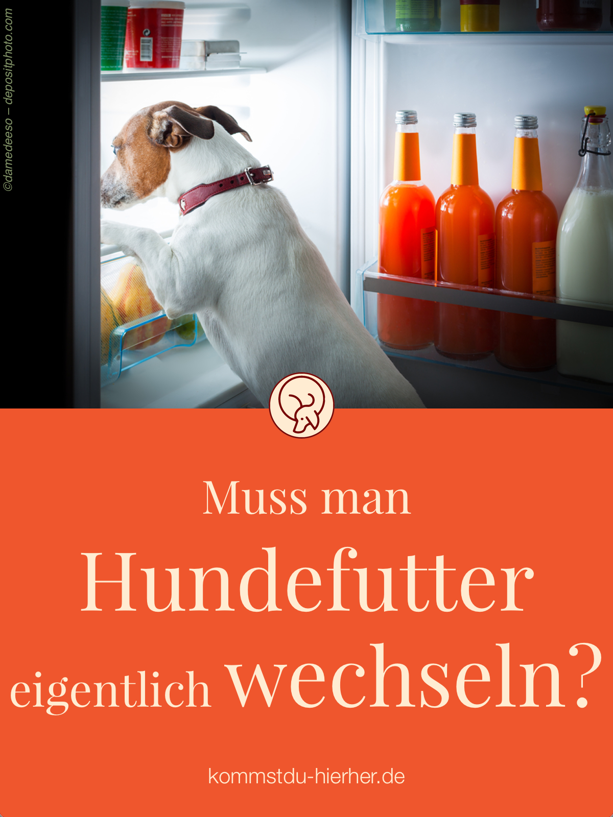 Pro Contra Hundefutter Wechseln Hunde Futter Hundefutter Und