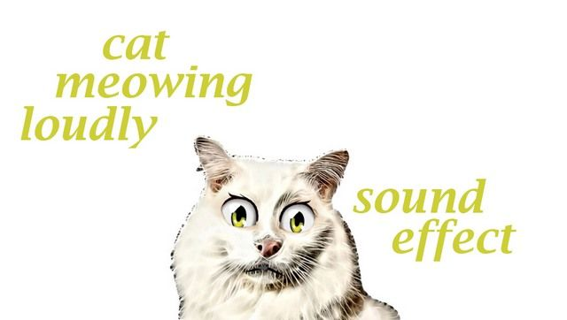 Cat Meowing Loudly Sound Effect Animation