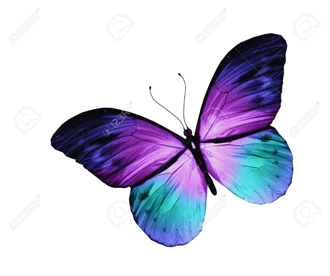 Très Papillon Bleu, Isolé Sur Fond Blanc Banque D'Images Et Photos  OV39