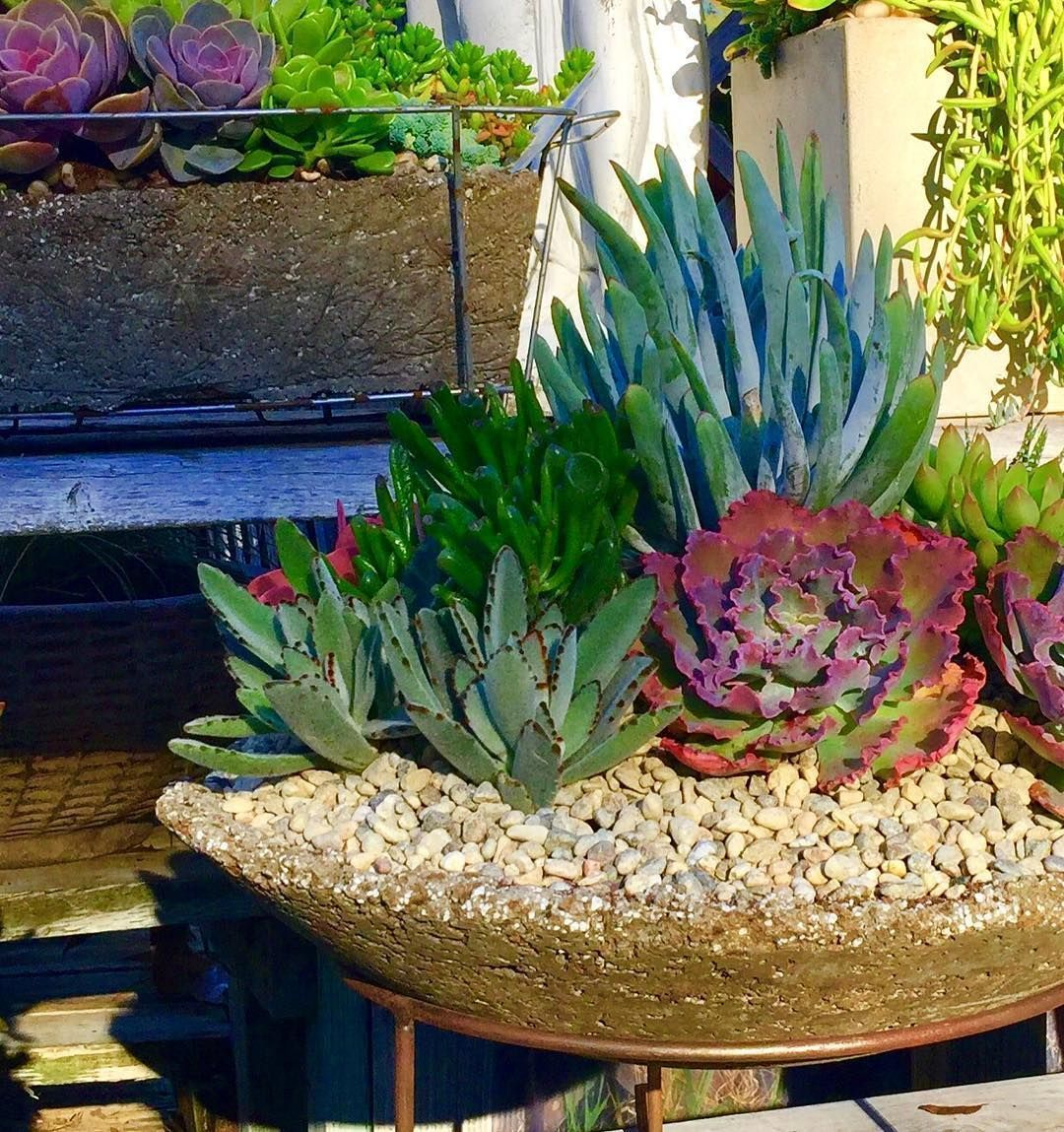 Succulent Gardens-Have you wondered on how to decorate your garden ...