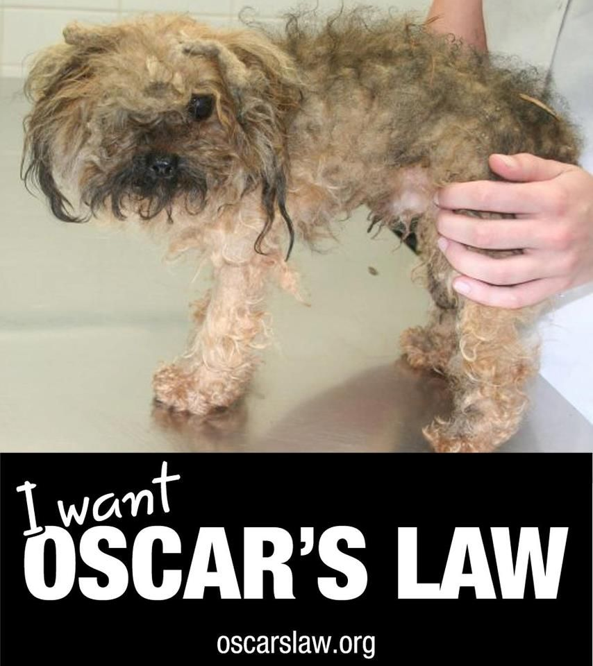 oscars law now | Animal rights | Pinterest