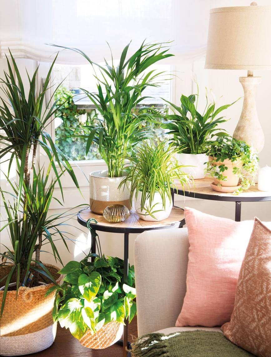 Ficus Tropical Y Fresca Plantas Interior Decoracion Plantas De