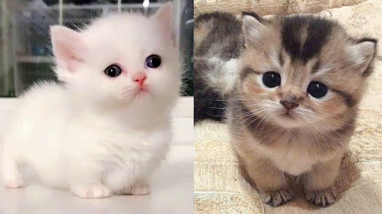 Cute Is Not Enough Cute Kittens In The World 2 Cutevn Animals Youtube In 2020 Kittens Cutest Baby Animal Videos Cute Kitten Gif