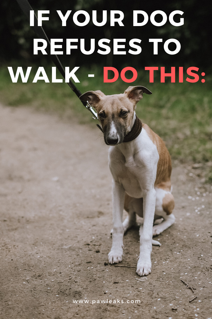 Pin On Training Your Dog