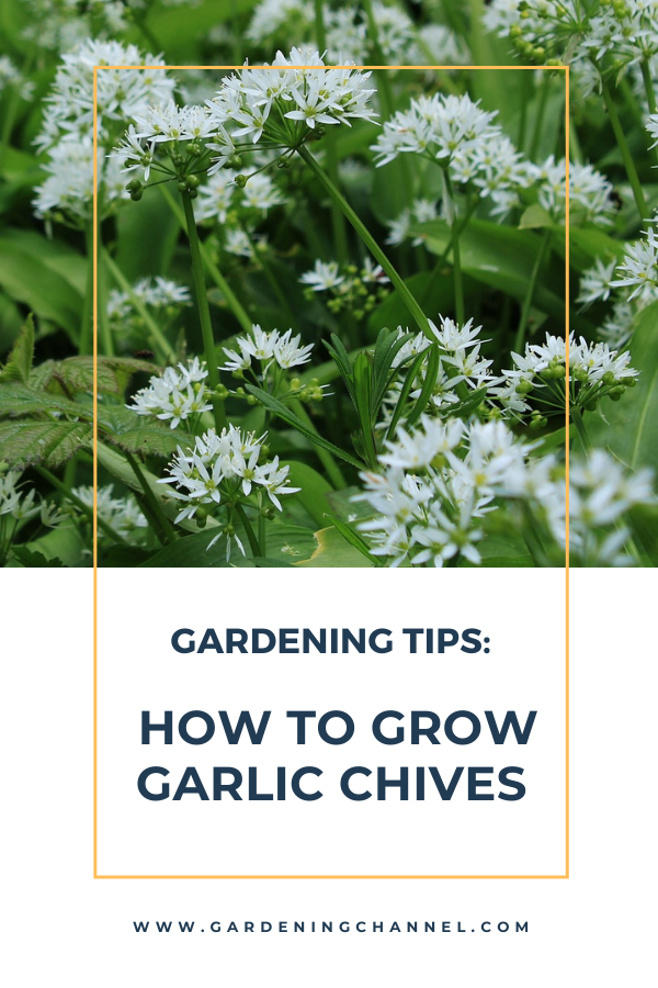 13 Vegetables That Magically Regrow Themselves Plants Indoor Herb Garden Herbs Indoors