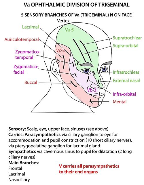 Applied Anatomy Of Trigeminal Nerve