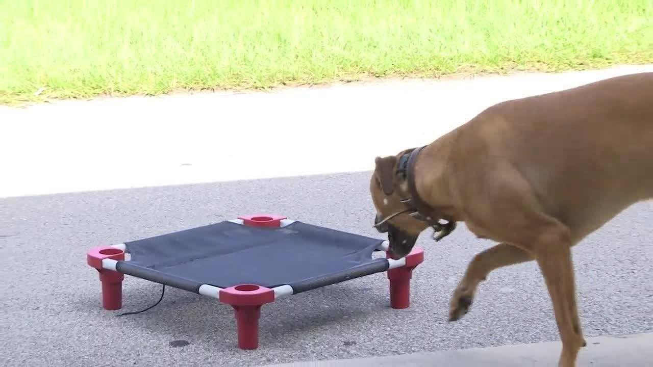 Sit Happens Dog Training Dog Training Dogs Animals