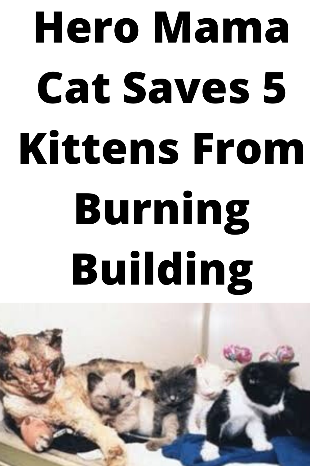 Five Kittens Were Trapped In Burning Building Hero Mama Cat Walks Through Flames For Them In 2020 Mama Cat Kittens Cats