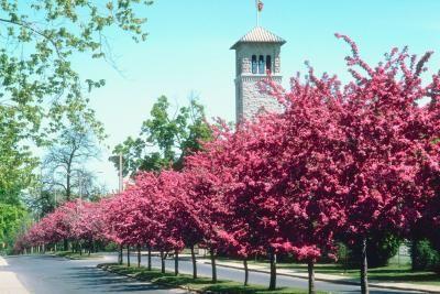 The Best Trees For Lining Driveways Hunker Landscape Design Traditional Landscape Modern Landscaping