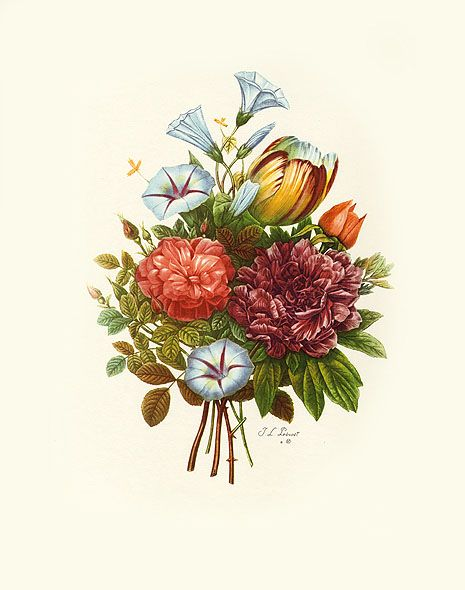 Botanical Etchings after Tessier, Prevost, Van Geert