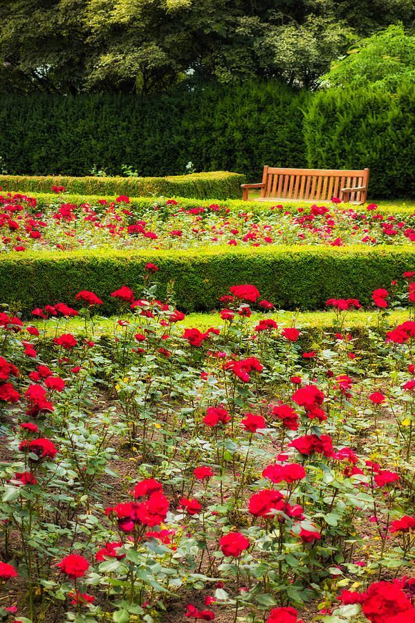 Red And Green Rose Garden By Matthias Hauser Green Rose Garden Beautiful Red Roses
