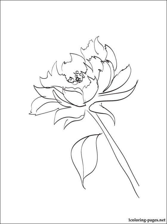 Peony Coloring Page Coloring Pages Watercolor Mixed