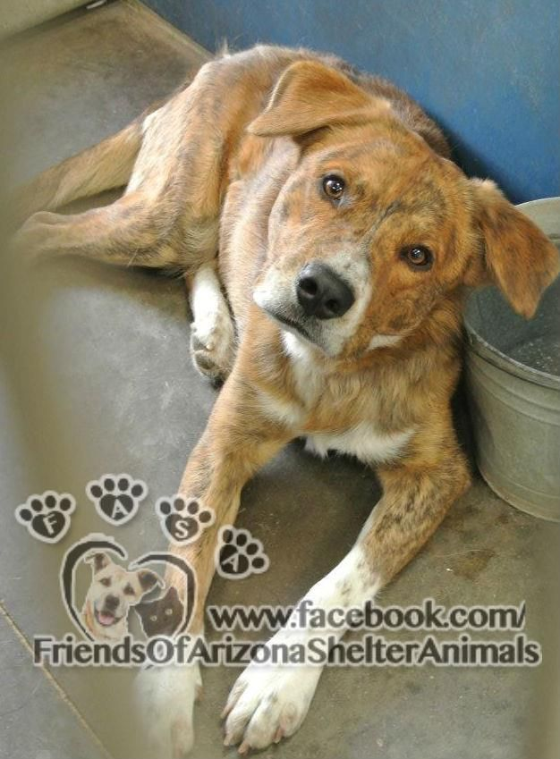 Pin On Az Pets Need Home Foster Or Adopt