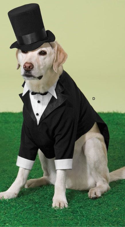 Dog Wedding Tuxedos by GypsyEyesClothing on Etsy, $99.00 | Gypsy ...