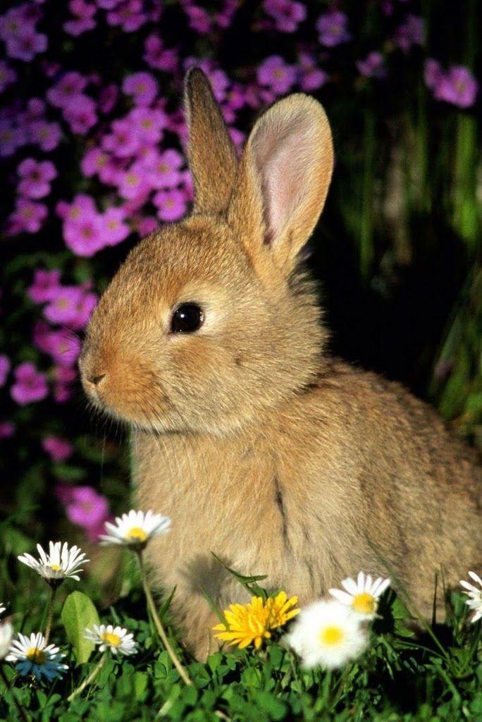 20 Baby Animals Say Hello To Spring Beautiful rabbit