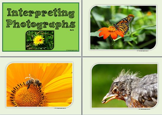 Interpreting Photographs Set 3. A collection of nine photographs with insects as subjects. Also included is a set of questions to prompt student interpretation of the photograph. This response could be given orally or in written form. This resource creates an instant wall display. The photographs may also be used as writing prompts. CLICK image | then click large PREVIEW image to DOWNLOAD full resource or See VISUAL LANGUAGE at ... www.abcteachingresources.com