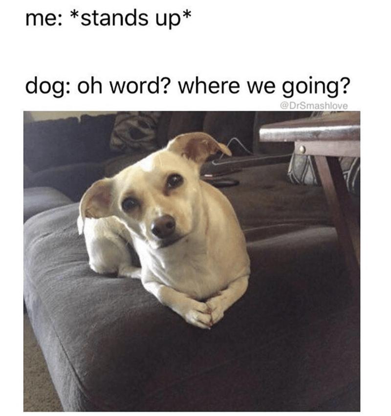 38 Funny Random Memes That Ll Give You A Hefty Guffaw Funny Dog Memes Funny Animal Memes Funny Dog Captions