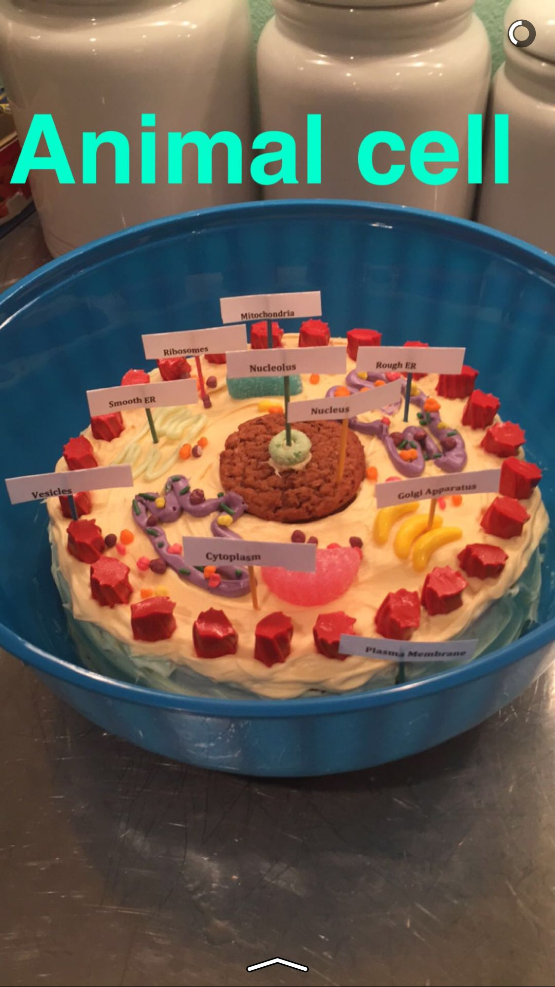 Edible Animal Cell Project Made By My High School Student Organelles Cake Plant And Model Diagram More