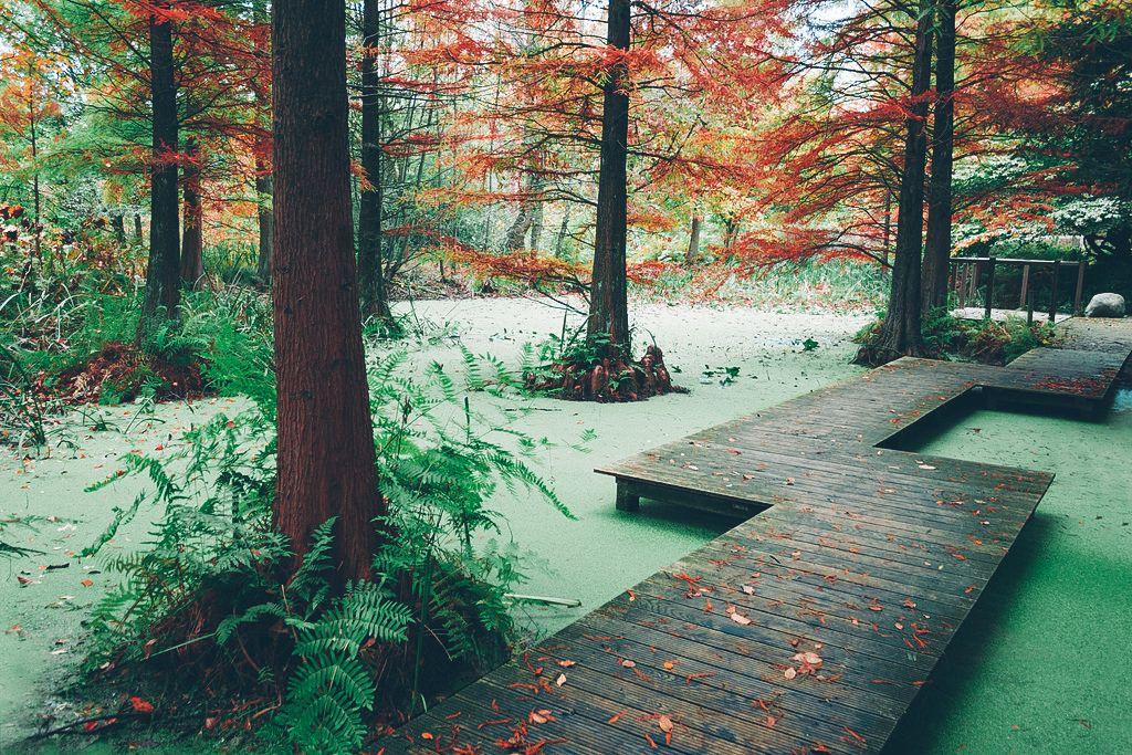 Enchanting Autumn Bochum Botanischer Garten Garten Landschaftsbau