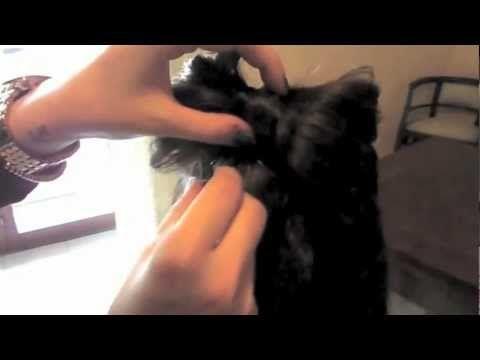 Un #fiocco tra i #capelli? Ecco come realizzarlo seguendo il #tutorial della #FashionBlogger @Nicoletta Scent of Obsession di Scent of Obsession! :)