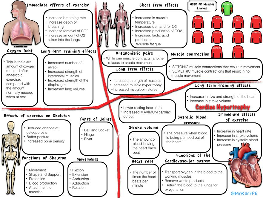 how does exercise affect breathing rate? essay 2018-10-10 what are factors that affect the breathing rate of human beings  there are lots of things that can affect the rate of breathing in humans exercise is one of those things,  how does body weight affect breathing rate.
