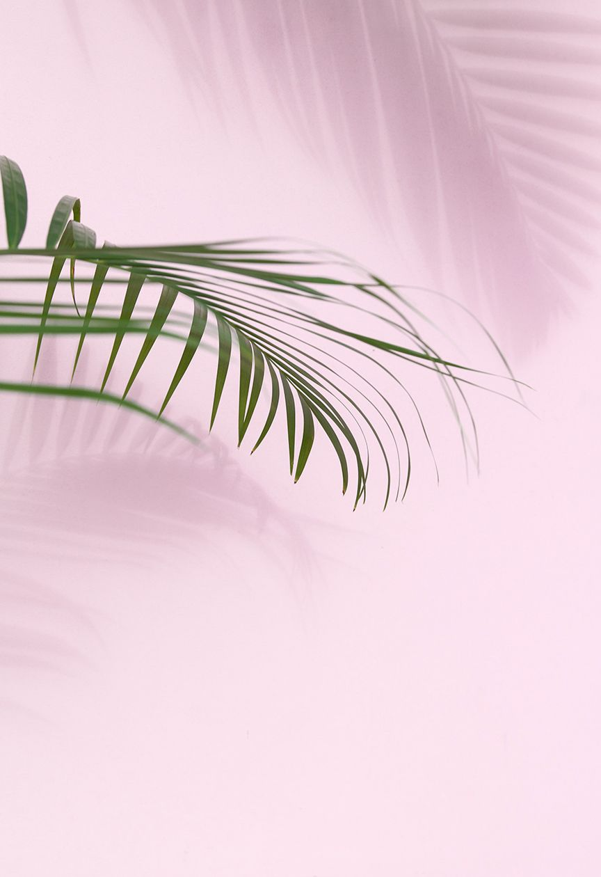 Pink Aesthetic Themes Photo Blush Color Stories Palm Future