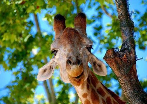 this animal.....it's beautiful.....
