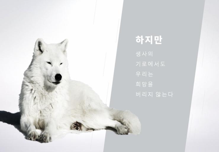 Ppt 환경보호에 대한 심플한 Ppt 템플릿 모노톤의 북극의 눈물 발표에 적합한 동물보호 Ppt 디자인 템플릿 디자인 파워포인트 테마