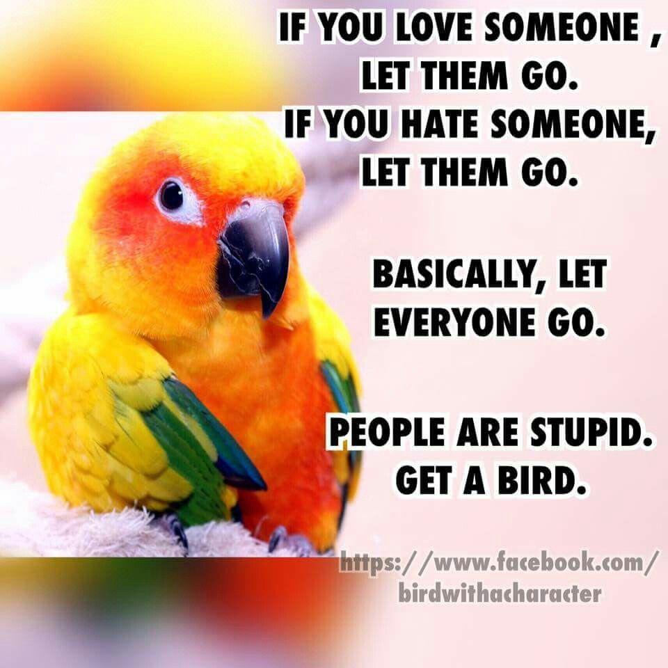 Love Bird Quotes Das Ist Wahrich Will Auch Einen   Parrot Humor  Pinterest