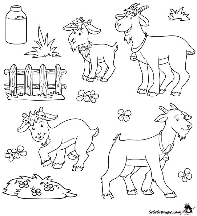 Dessin gratuit colorier les animaux de la ferme un bouc une ch vre des chevreaux la - Dessin animaux de la ferme ...