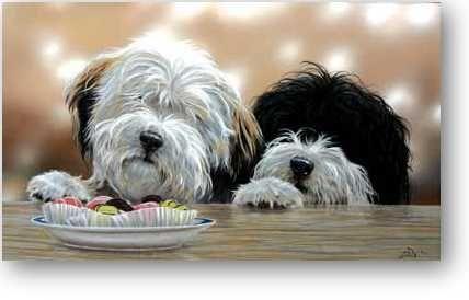 Different Dog Breeds Hunde Terrier Hunderassen