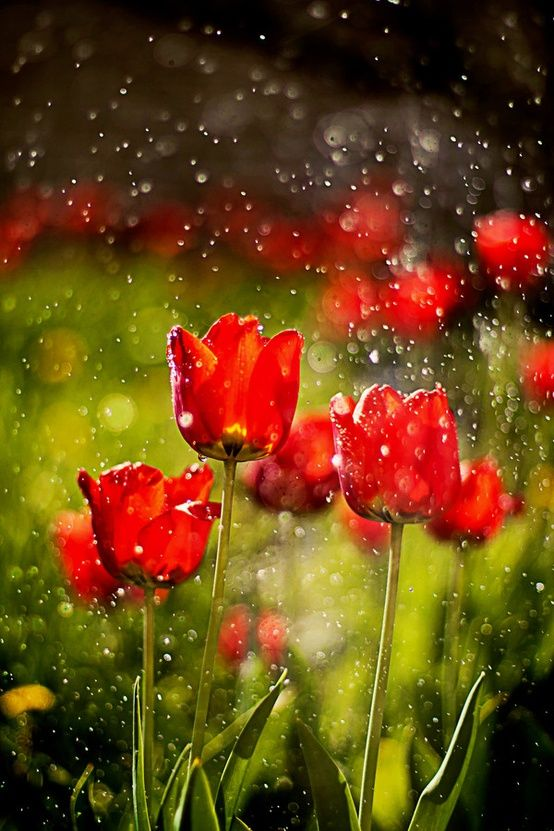 Stunning Nature Photography Collection 10 Pictures Most Beautiful Pages Flowers Beautiful Flowers Nature Photography