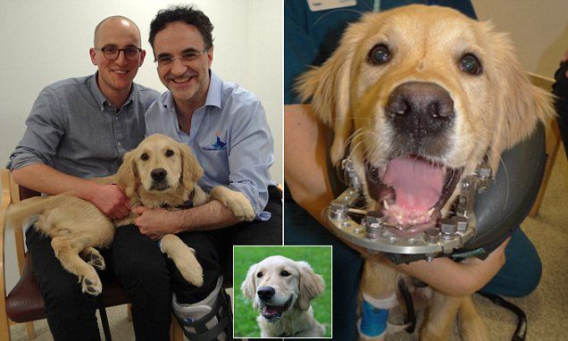 Supervet Rebuilds Puppy S Jaw After It Was Ripped Off In Dog