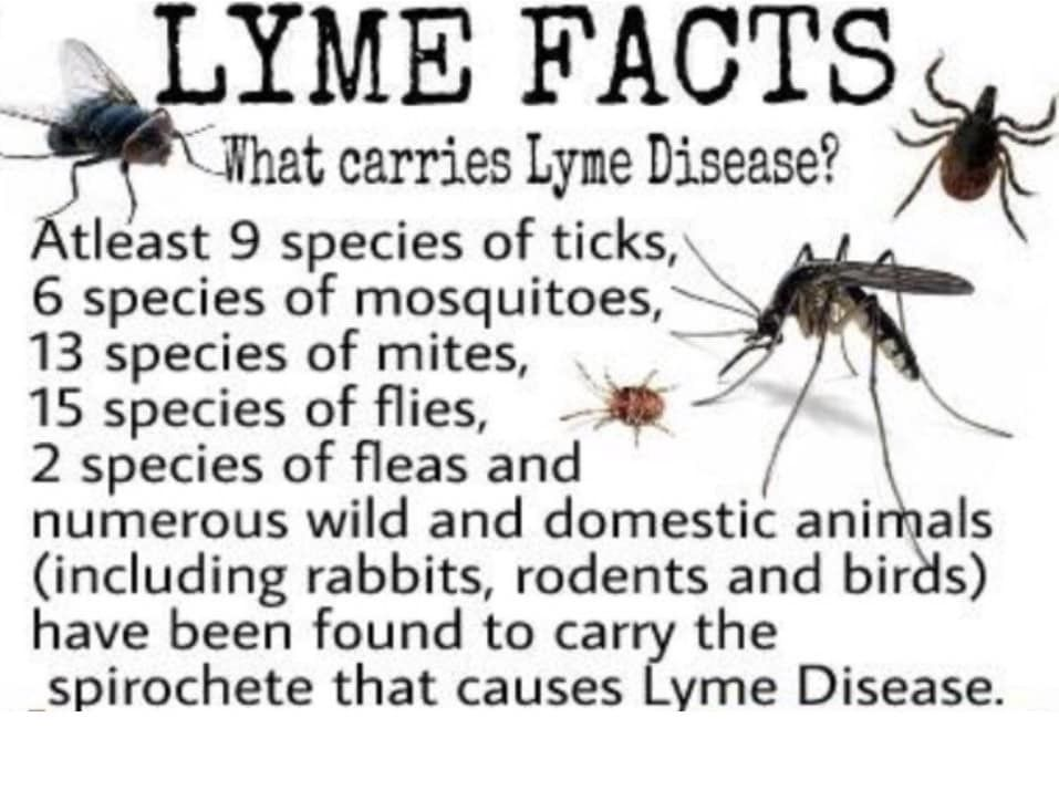 Pin by Megan on LYME Lyme disease, Lyme, The cure