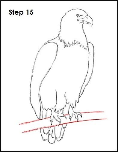 23 Contoh Gambar Kartun Mudah Digambar Kumpulan Sketsa Gambar Burung Elang Hantu Merpati Merak Download Ida Koes Eagle Drawing Eagle Drawing Easy Drawings