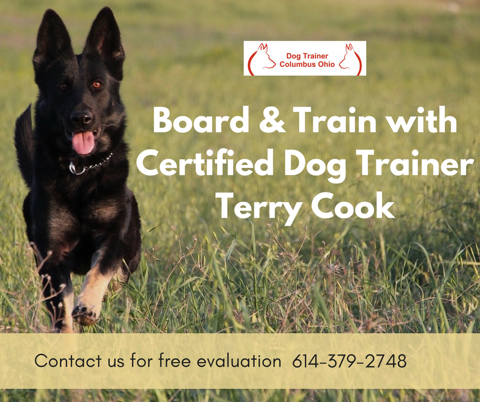 Are You Searching For The Best Place Dog Training In Columbus Ohio Dog Trainer Columbus Ohio Is Serving In The Dog Trainer Dog Training Obedience Dog Training