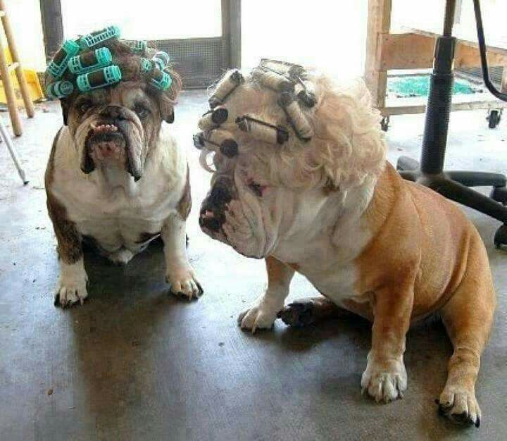 Cute Puppies Image By Caylee On Bulldogs Cute Animals