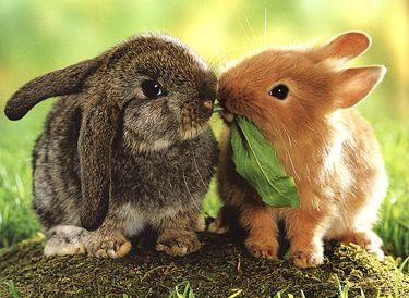 Tener uno o más conejos juntos? | Fotos de animales tiernos ...