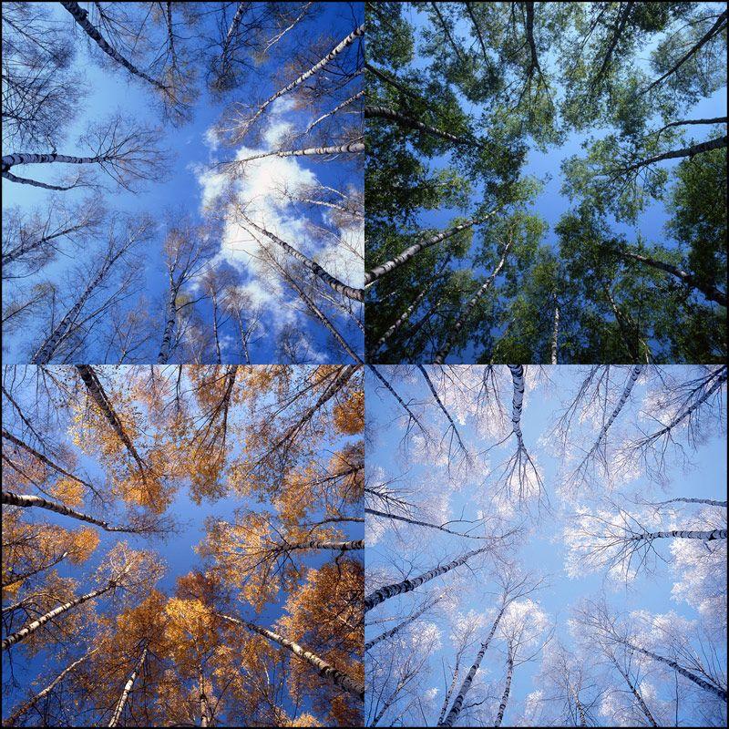 мультики картинки погоды в разное время года джанчатов